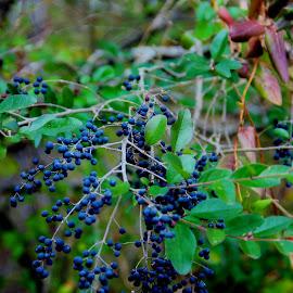 by Bob Wikert - Nature Up Close Gardens & Produce