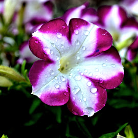 After the Rain by Teresa Wooles - Nature Up Close Natural Waterdrops ( water drops, flower )