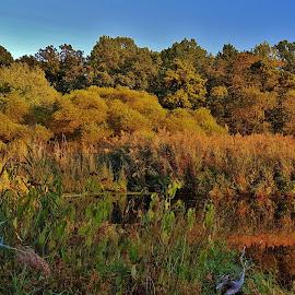 Evening Summer Pond Scene  by Matthew Beziat - Landscapes Waterscapes ( pasadena, ponds, weinberg park, wetlands, twilight, anne arundel county, weinberg, maryland, pasadena maryland, yates pond, dusk, evening )