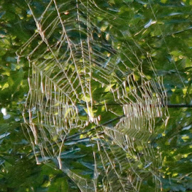 Oh the tangled web we weave... by Jennifer  Loper  - Nature Up Close Webs ( no spider here, large web, engineering marvel, spider trap, spider web )