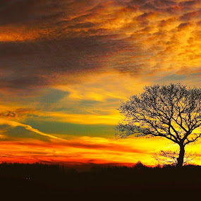 Yggdrasil/Tree of life by Kim Moeller Kjaer - Landscapes Sunsets & Sunrises (  )