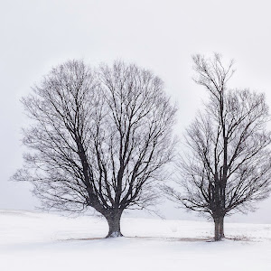Trees in Snow Storm, Canaan Valley, WV, far.jpg