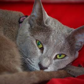 by Karen Beetge - Animals - Cats Portraits