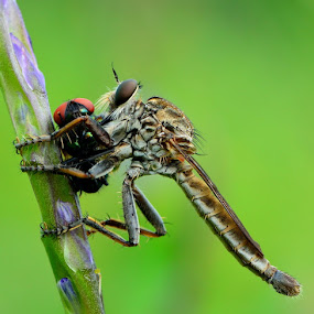 Lunch Time by Ade Yuda - Animals Insects & Spiders