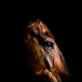 Fine art portrait of horse by Mark Helm - Animals Horses ( face, equine, art, horse, fine )