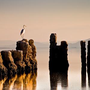 Salton Sea-2.jpg