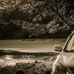 Garden of Avanza by Cristopher Selga - Transportation Automobiles ( water, reflection, cars, beach, sunlight, garden, toyota )
