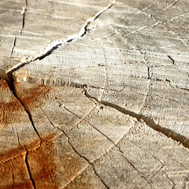 Stumped by Jennifer Ablicki - Nature Up Close Trees & Bushes ( cracks, stump, wood, tree, lines )
