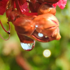 After a rain by Bill Martin - Abstract Water Drops & Splashes ( macro, flowers, water droplets )