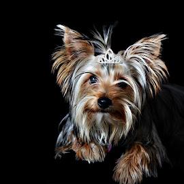 by René Kleynhans - Animals - Dogs Portraits