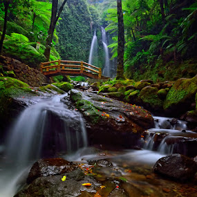 The Lost Paradise by Hendri Suhandi - Landscapes Travel ( tree, jungle, waterfall, forest, java, travel, karanganyar )