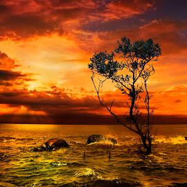 Disturbed Sea by Gilbert Sanchez - Landscapes Beaches ( water, sun set, sun rise, waterscape, sea, disturbed sea, ocean, beach, seascape, sunlight, mangrove, sun rays, sun, beaches, seas, tree, sunset, sundown, trees, sunshine, sunrise, relax, tranquil, relaxing, tranquility )