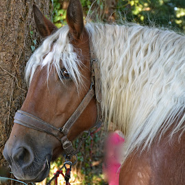 Cheval de trait by Serge Ostrogradsky - Animals Horses