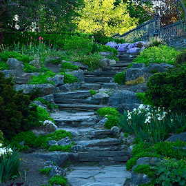 Rock Garden Stairway by Robert Ratcliffe - City,  Street & Park  City Parks ( nature, stairway, green, beauty, flowers, natural, rocks, garden,  )
