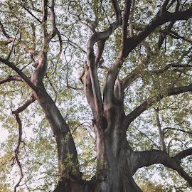 Tree by Lood Goosen (LWG Photo) - Wedding Bride & Groom ( wedding photography, wedding photographers, weddings, wedding, bride and groom, wedding photographer, bride, groom, bride groom )