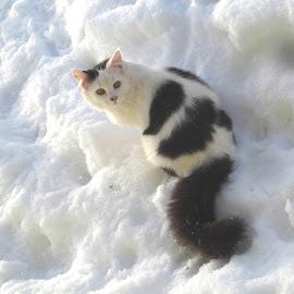 Black and White by Mārīte Ramša - Animals - Cats Portraits (  )