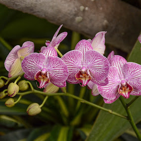 Blooms and Buds by Robert Coffey - Flowers Flower Gardens ( orchids, stems, botanical, buds, flowers )