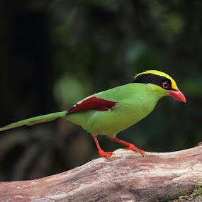 by Desmond Lee - Animals Birds