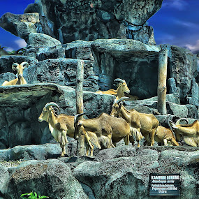 happy family by Sulfhian Sultiamiharja - Animals Other Mammals ( #landscape, #animal, #love, #indonesia, #fhian, #hdr )