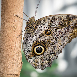 Butterfly by Dominic Thibeault - Animals Insects & Spiders