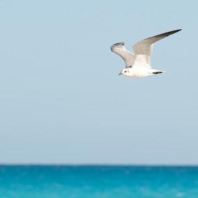 by Luis Cabarrus - Animals Birds