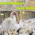 App Panduan Budidaya Ayam Broiler apk for kindle fire