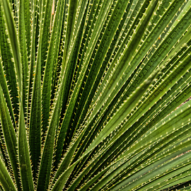 by Judy Rosanno - Nature Up Close Other plants (  )