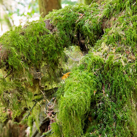 Oregon Moss by Greg Head - Nature Up Close Other plants ( oregon, nature, tree, green, moss )