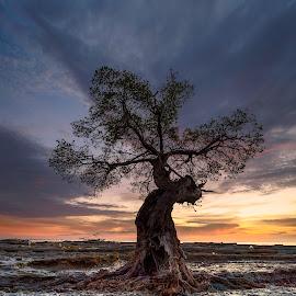 i belong to you by Rocky Jaya - Landscapes Sunsets & Sunrises