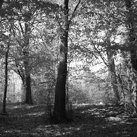 Мълчание by Georgi Kolev - Black & White Landscapes ( гора., ден., летен., топъл., тишина. )
