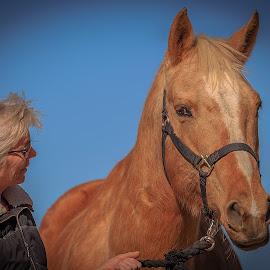 Mr Ed? No. by Gary Shaddox - Animals Horses ( horseback, animals, horses, horse, mammal, animal )
