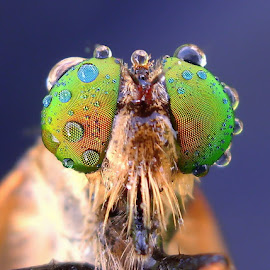 Digital Camera Shots (BenQ DC E1230) by Iwan Ramawan - Animals Insects & Spiders