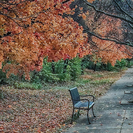 Lonely Bench by Richard Michael Lingo - Artistic Objects Furniture ( park, bench, autumn, artistic objects, furniture )