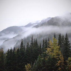 Mist on the Mountains by Lena Arkell - Landscapes Mountains & Hills ( mountains, canada, fog, rocky mountains, british columbia, mist )