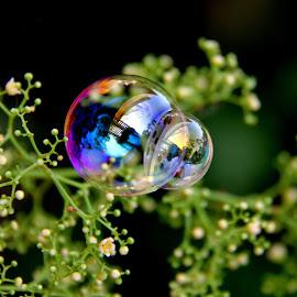 Double Bubble by Robyn Gael Ellsworth - Abstract Macro ( bubble, macro, double, rainbow, flower )