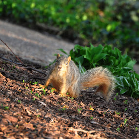 Squirreling Around by Thespina Aslanidis - Animals Other Mammals ( park, nuts, cute, squirrel, mammal )