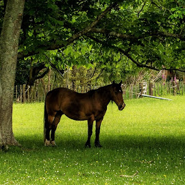 by Graeme Hunter - Animals Horses