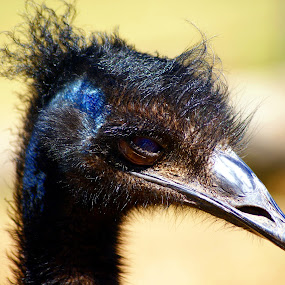 Ostrich Head by Joanne Draper - Novices Only Wildlife ( #ostrich, #bird, #wildlife )