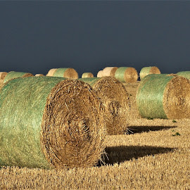 Hay Bales by Sarah Harding - Novices Only Landscapes ( farm, hay, novices only, scenic, landscape )