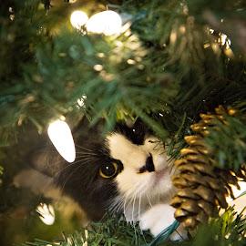 by Brook Kornegay - Animals - Cats Kittens