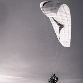 Flying High by Tiffany O'Malley - Sports & Fitness Other Sports ( brave, b&w, black and white, ocean, coastline, coast, sky, daring, sailing, parasailing, sail, nikon, la jolla, parachute, clouds, water, wind, california, parasailers, cliff, horizon, sport, heights, dangerous, gliding, jump, athletes, shoot, outdoor, daredevils )