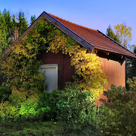 by Bente Agerup - Buildings & Architecture Homes ( houses, autumn, sunny, buildings, yellow )