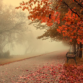 One misty autumn morning by Nenana :) - Landscapes Weather ( foggy, promenade, bench, tree, autumn leaves, fog, autumn, trees, autumn colors )