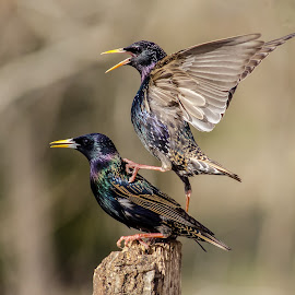 by David Hopper - Novices Only Wildlife