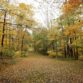 Country Path in Autumn by Kristine Nicholas - Novices Only Landscapes ( rainy, pathway, green, forest, overcast, yellow, road, leaves, woods, rural, country, roadway, red, autumn, foliage, fall, path, trees, wet )