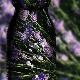 Lavender blue by Paula Palmer - Digital Art Things ( blue, flora, lavender, digital, flower )