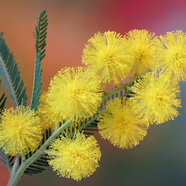 by Boris Buric - Flowers Flower Gardens (  )