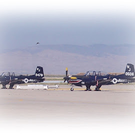 Twins by Sandy Stevens Krassinger - Transportation Airplanes ( propellars, airplanes, tails, wings, transportation )
