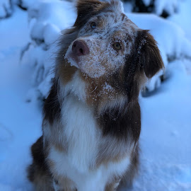 Kita's Snow Day by Alexis Gray - Animals - Dogs Portraits