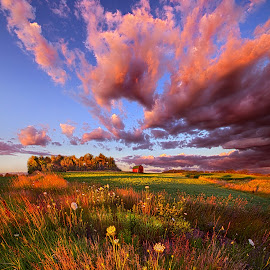 It's Like Going to Heaven with Your Feet Still on the Ground by Phil Koch - Landscapes Prairies, Meadows & Fields ( vertical, farmland, travel, yellow, leaves, love, sky, spiritual, barn, nature, tree, weather, perspective, flowers, light, orange, art, twilight, agriculture, journey, horizon, portrait, environment, dawn, season, serene, trees, lines, natural, hope, inspirational, wisconsin, ray, joy, country living, beauty, road, landscape, phil koch, spring, sun, photography, farm, life, path, horizons, inspired, clouds, office, park, heaven, green, beautiful, scenic, morning, shadows, field, red, blue, sunset, amber, peace, meadow, summer, beam, earth, sunrise, garden )